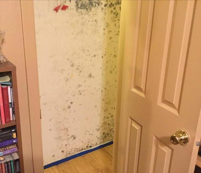 A closet door opened exposing mold growth from a leak