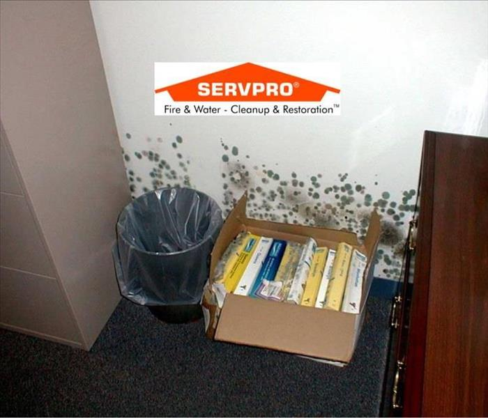 A picture of a carpeted floor with a trashcan and a box of books against the wall and mold growing behind it and SERVPRO logo