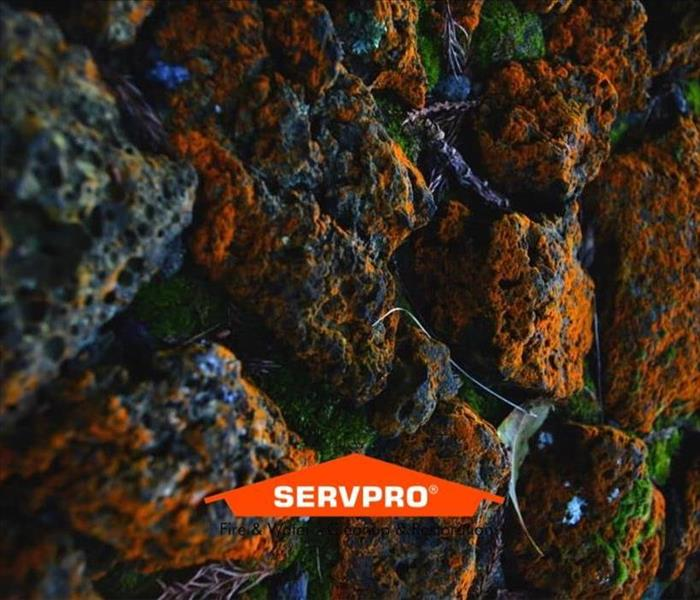 A close up image of mold spores with green, orange, blue and yellow tints to it with the SERVPRO logo bottom center
